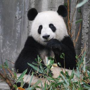 seo google-panda